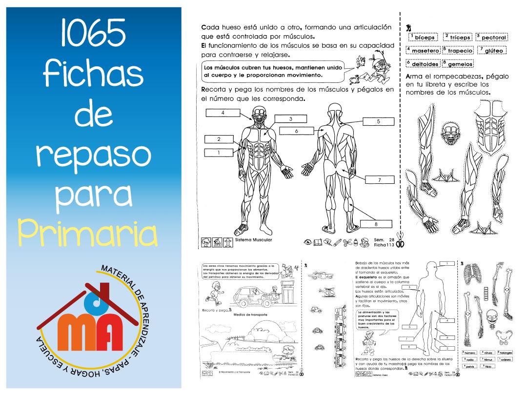 1065 repaso primaria